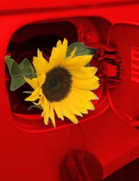 gas tank with sunflower coming out the tank